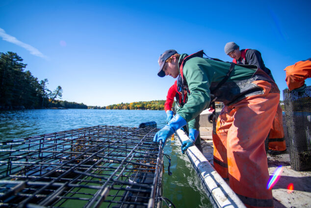 image of people hauling lobster traps