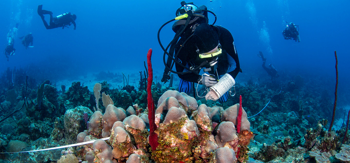 image of underwater research on coral reefs